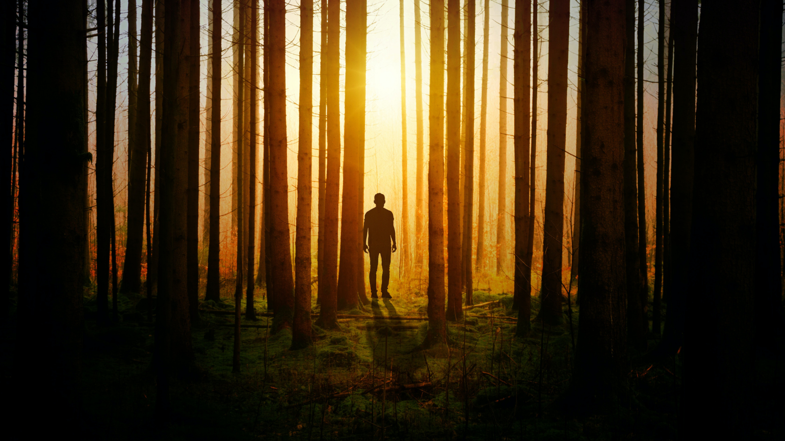 person in woods at night
